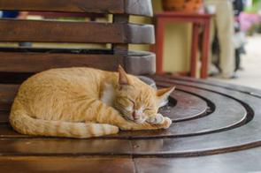 「猫派か犬派か」という話題は、日本では年代、性別の違いを問わず盛り上がるものではないだろうか。犬にも猫にもそれぞれ違った魅力があり、どちらも好きだという人は非常に多いが、近年は猫の飼育数が伸びていて、犬の飼育数より猫の方が多くなったと言われている。(イメージ写真提供:123RF)