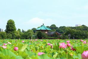 中国のポータルサイトに「ここが日本文化の中心だ」として、東京の上野公園を紹介する記事が掲載された。(イメージ写真提供:123RF)